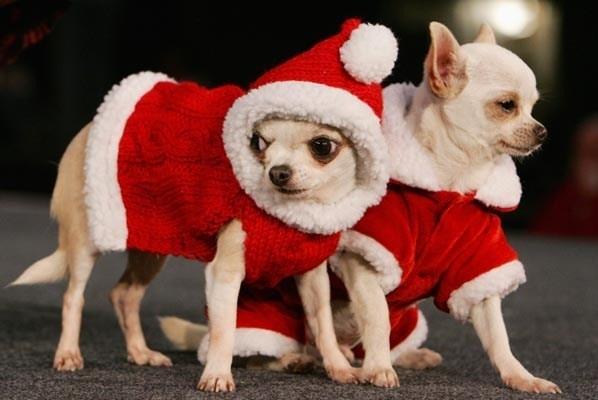 Cani siblogga for Animali a natale